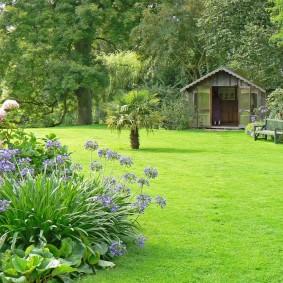 Куст садового лилейника с сиреневыми цветками