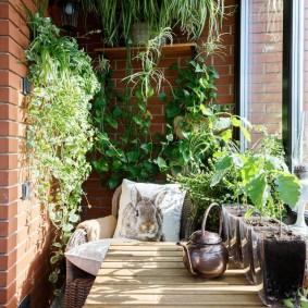 Домашние растения на балконе с теплым остеклением