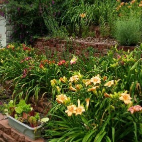Клумба на любимой даче с цветущими лилейниками