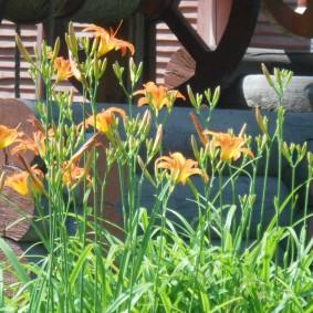 Высокие стрелки с оранжевыми цветками