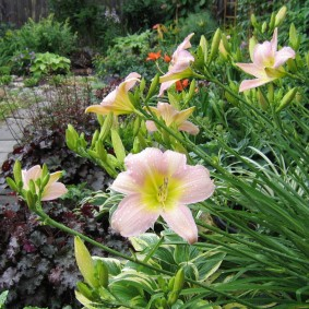 Нежный цветок на летней клумбе