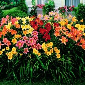 Летняя клумба с цветущими лилейниками