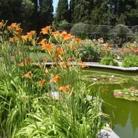 Оранжевые цветы около пруда на даче