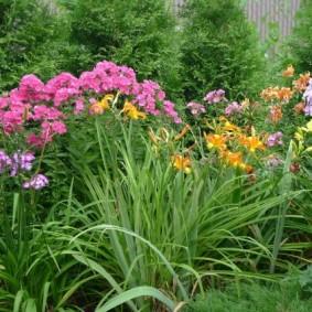 Садовый миксбордер с летнецветущими растениями