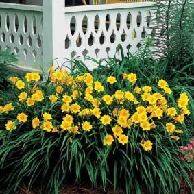 Желтые цветы перед белым крыльцом