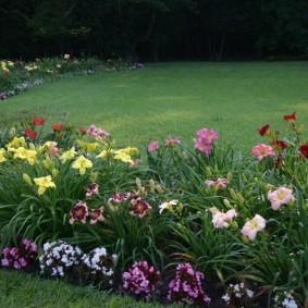 Цветущий бордюр вдоль зеленого газона