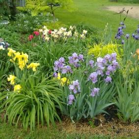 Лилейники на одной клумбе с лилиями