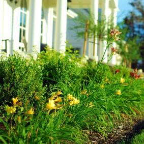 Цветник из неприхотливых растений перед частным домом