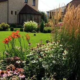 цветки лилейника на фоне английского газона
