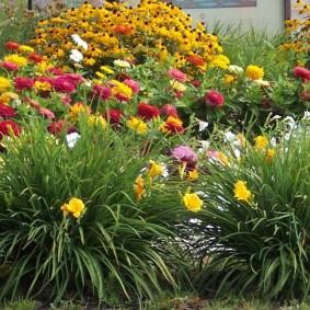 Яркий цветник в ландшафте садового участка