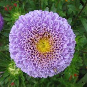 Крупный цветок с лепестками трубчатого типа