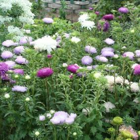 Однолетние цветы на дачной клумбе