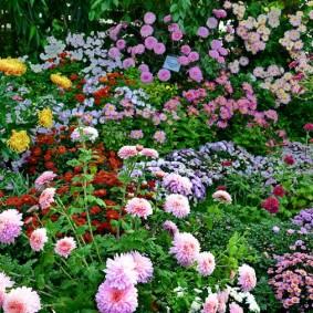 Красивый цветник с многолетними растениями