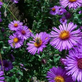 Сиреневые цветки с тонкими лепестками
