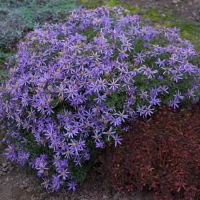Садовые цветы с редкими лепестками