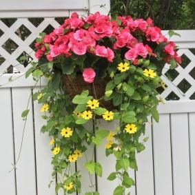 Кашпо с цветами на белом заборе