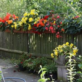 Декор старого забора цветущими растениями