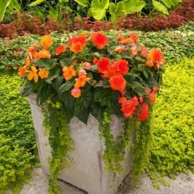 Квадратный вазон с красивыми цветами