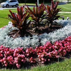 Солнечная клумба с цветущими растениями