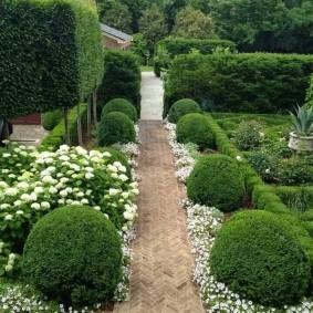 Самшиты вдоль садовой дорожки из клинкерной брусчатки