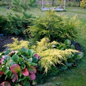 Садовый рокарий с хвойными растениями