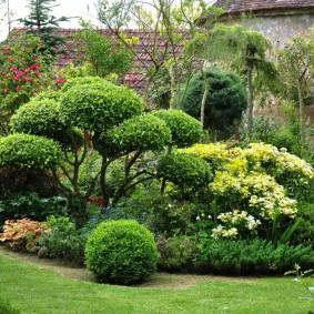 Садовый участок с вечнозелеными кустарниками