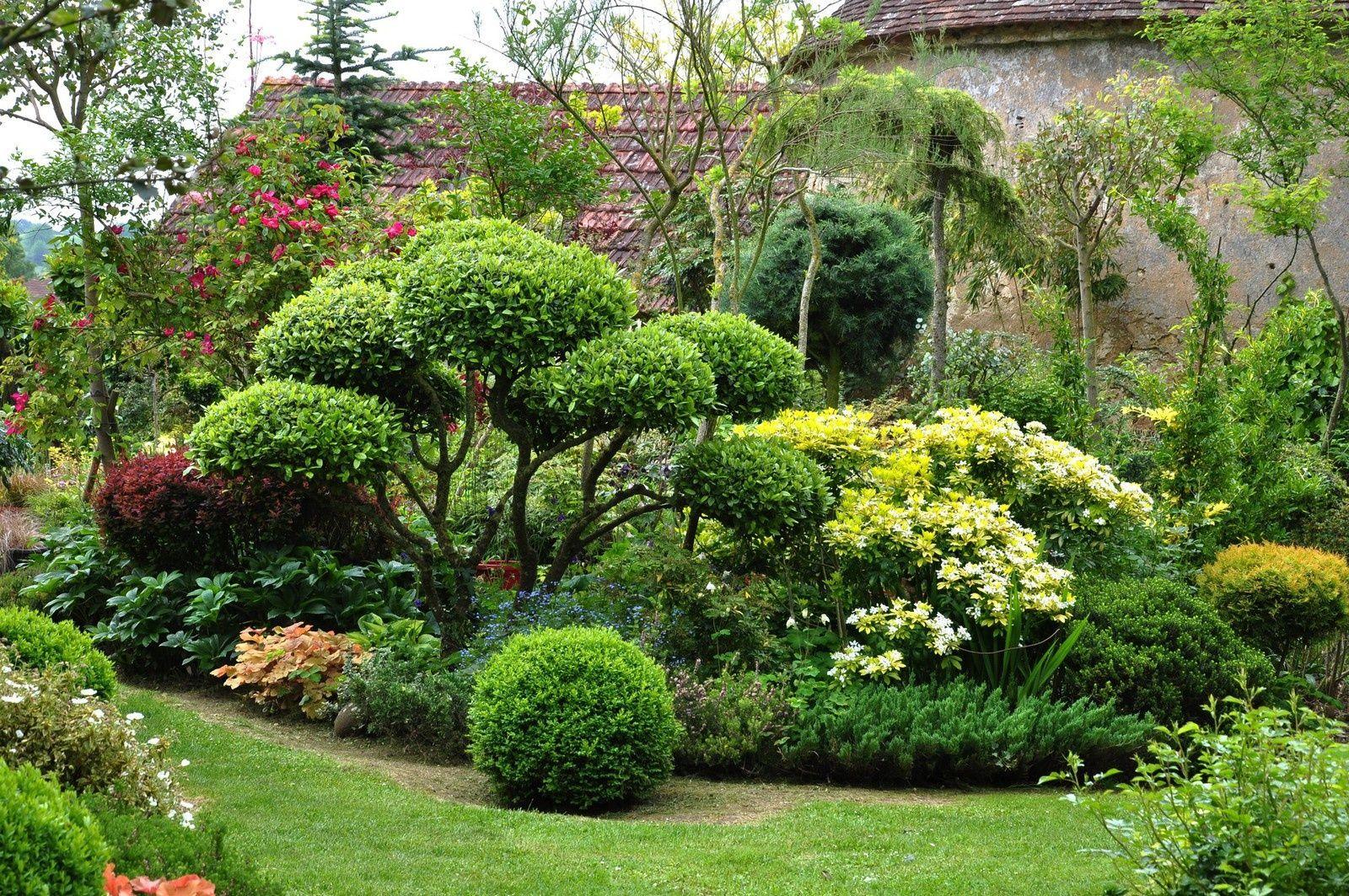 насыщенности вечнозеленые садовые растения фото и названия модели широких колёсах