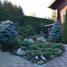 Декоративные растения во дворе загородного дома