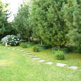 Пошаговая тропинка в саду с кедровыми соснами