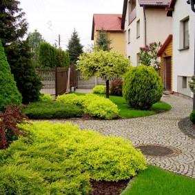 Хвойные растения перед частным домом