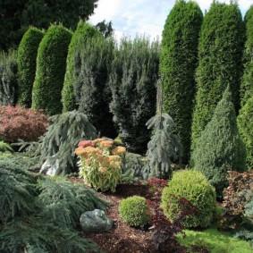 Садовый участок с хвойными растениями