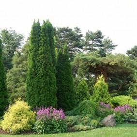Вертикальное озеленение участка хвойными растениями