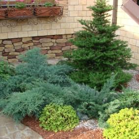 Клумба из хвойных растений перед фасадом частного дома
