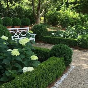 Гортензия метельчатая около садовой скамейки