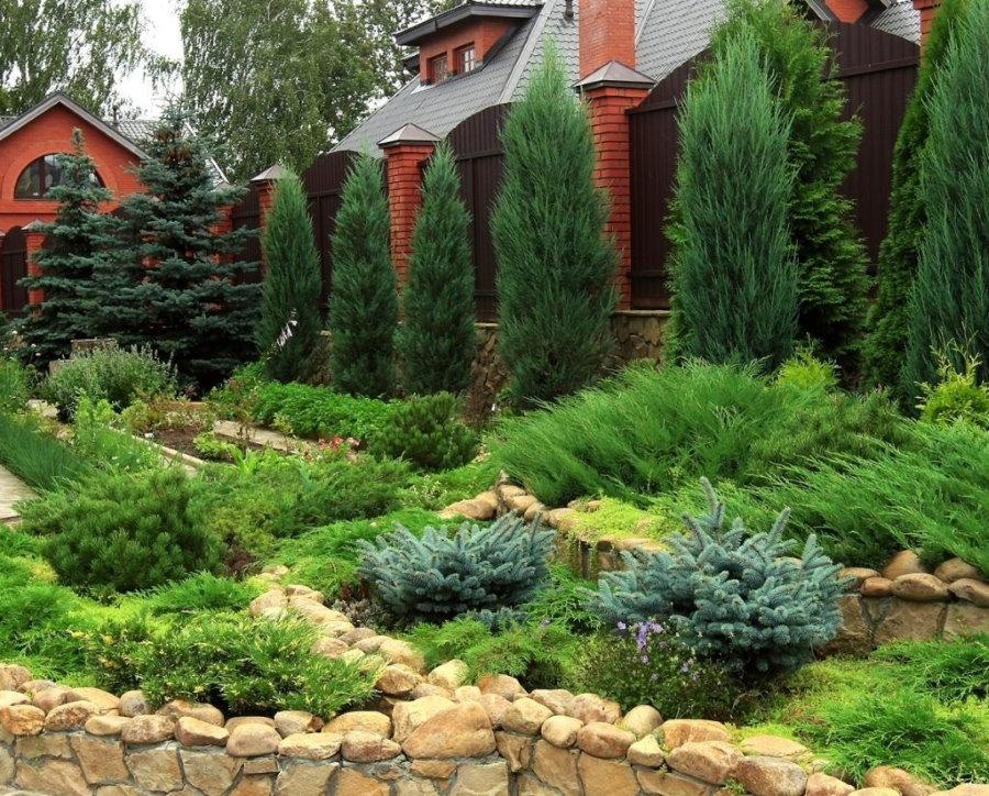 Загородный участок с хвойными растениями