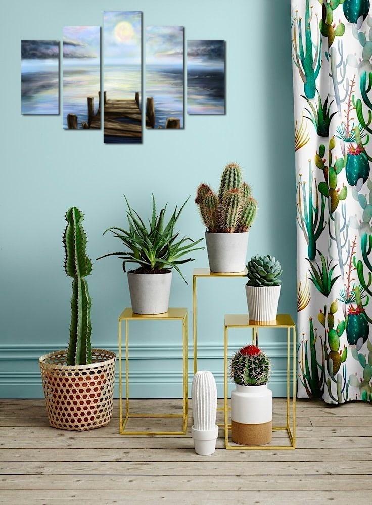 Коллекция кактусов в интерьере квартиры