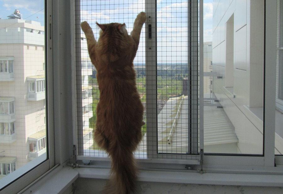 Алюминиевая сетка антикошка на раздвижной раме балконного остекления