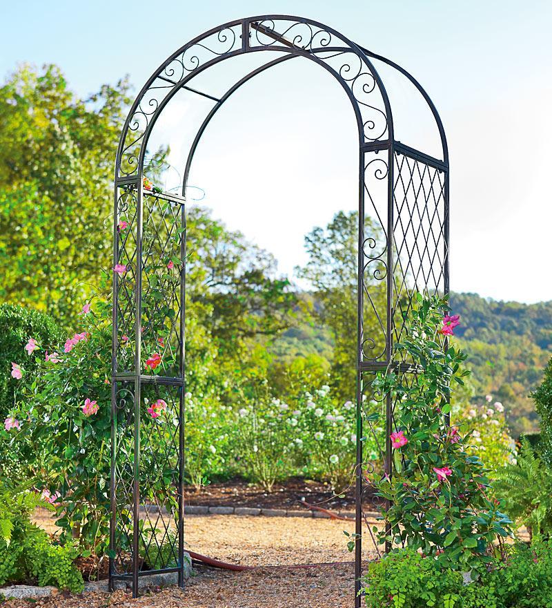 Плетистые розы у основания кованной арки