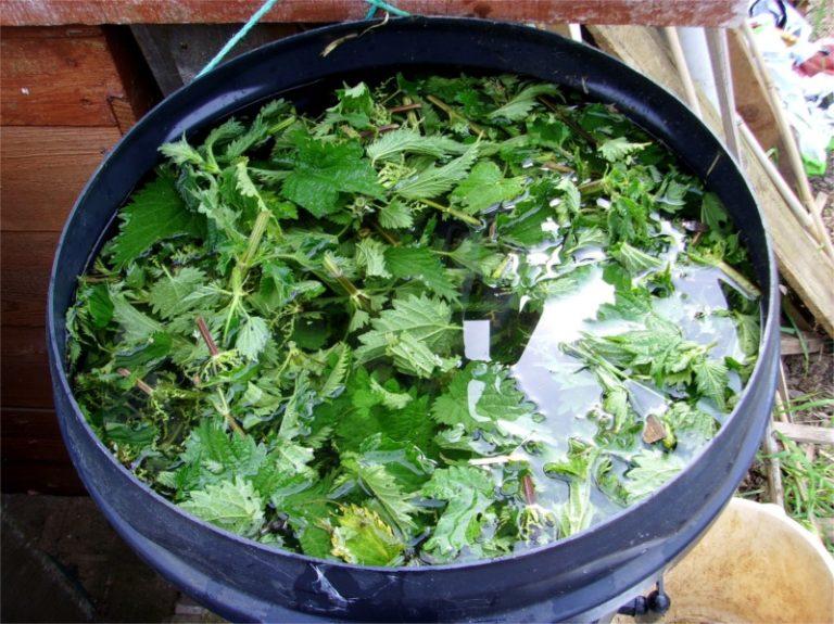Пластиковая емкость с крапивным настоем для сада