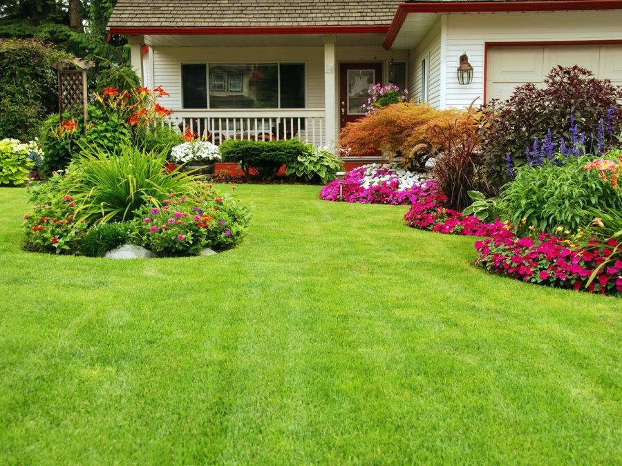 Красивая лужайка перед домом с декоративным газоном