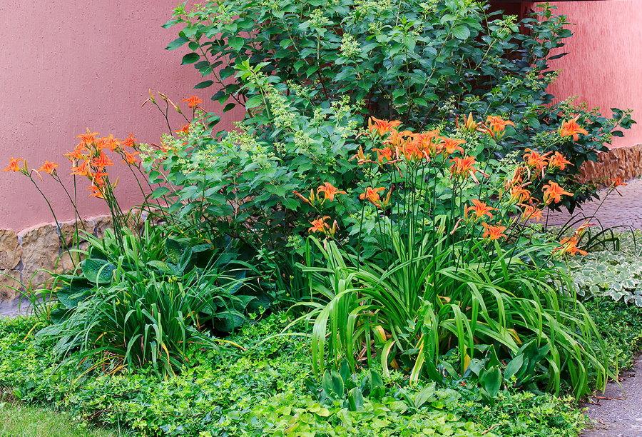 Клумба с оранжевыми лилейниками и метельчатой гортензией