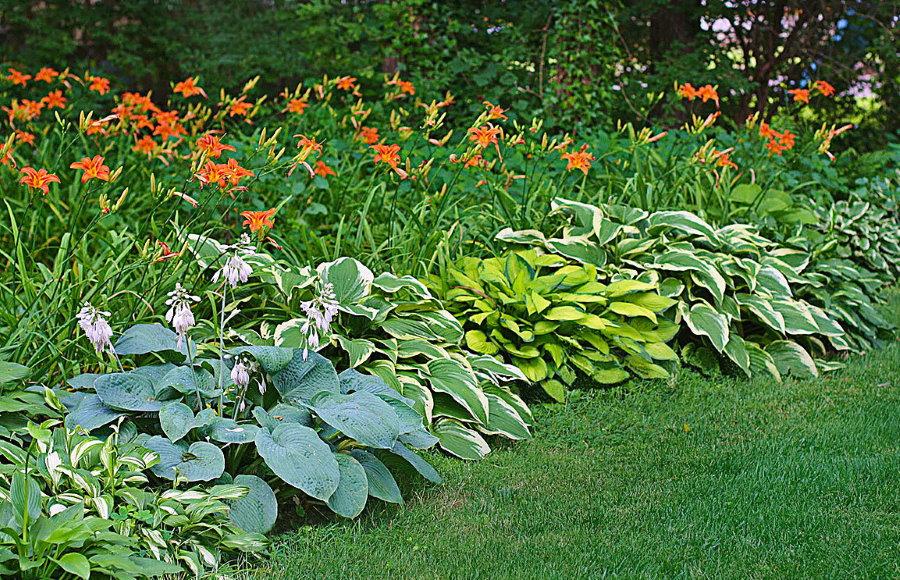 Соседи по клумбе для оранжевых лилейников