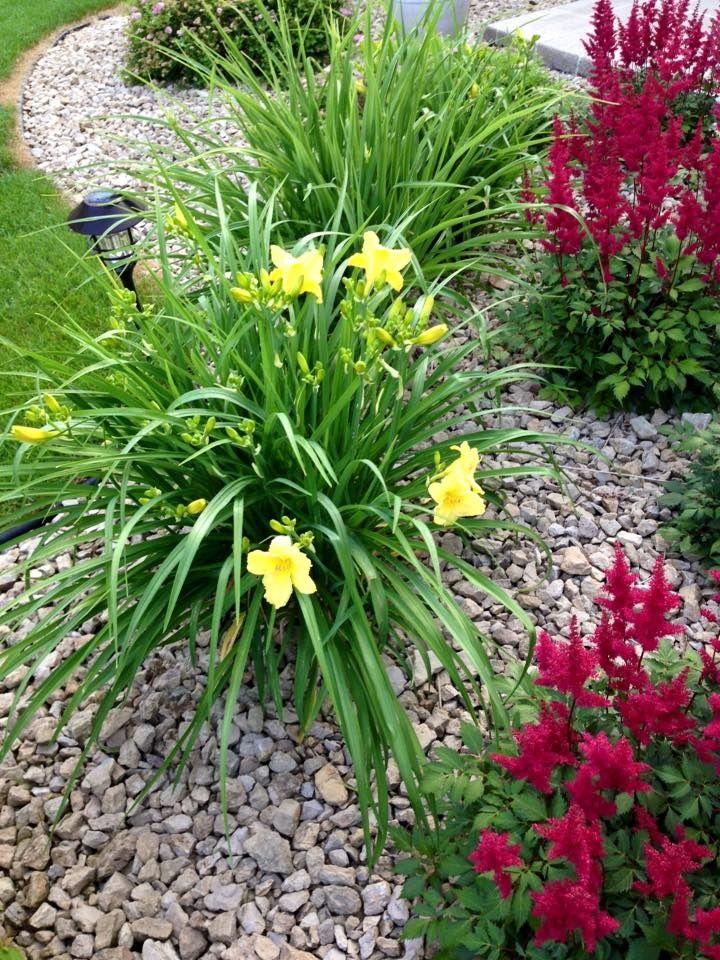 Светло-желтые лилейники на гравийной клумбе
