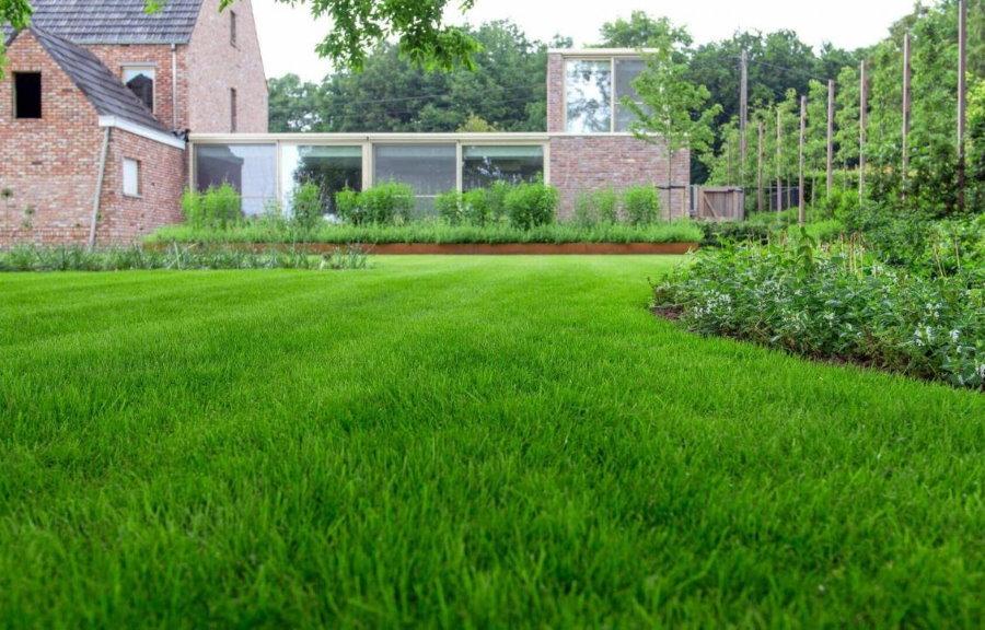 Загородный участок с луговым газоном