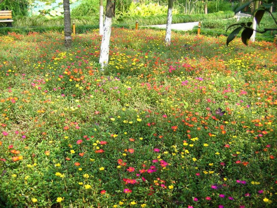 Цветущий мавританский газон на участке с деревьями