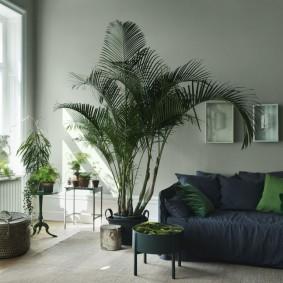 Высокая пальма на полу гостевой комнаты