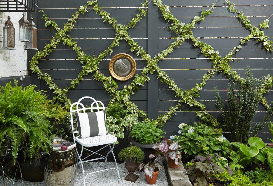 Вечнозеленый плющ на глухом заборе из досок