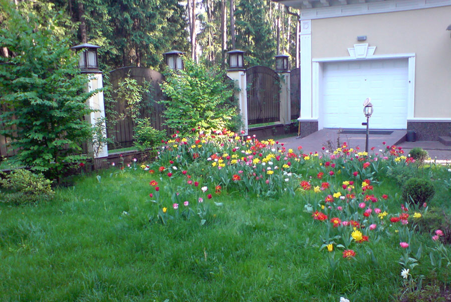 Цветущий газон перед гаражом на участке