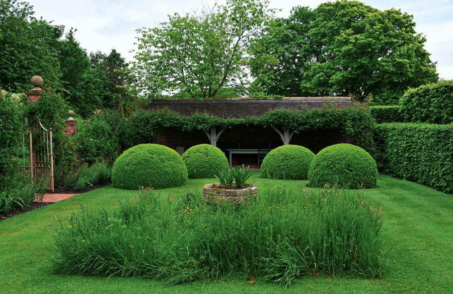 Полевые травы на английском газоне