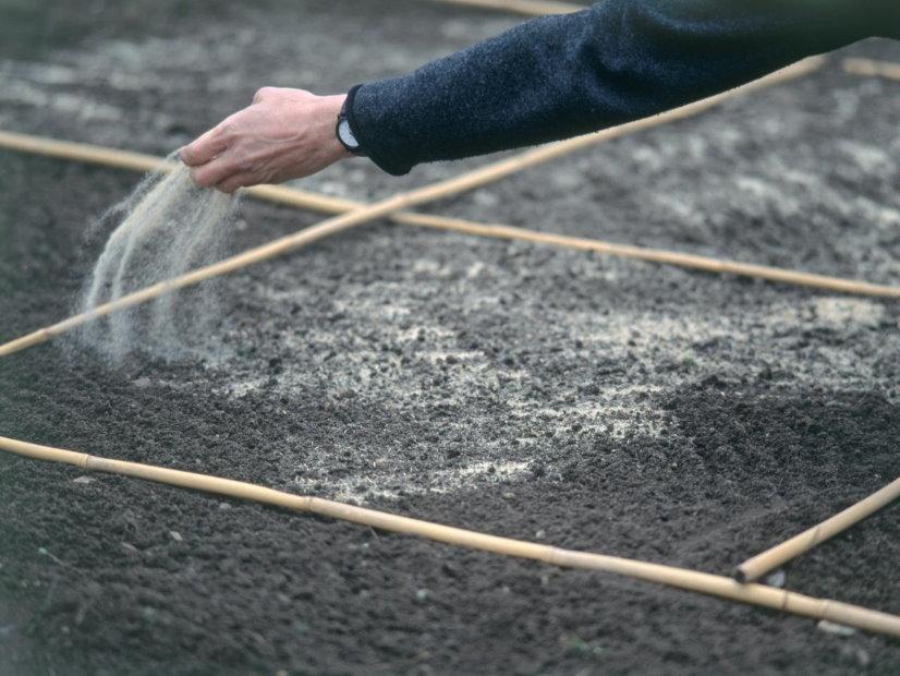 Посадка дачного газона своими руками